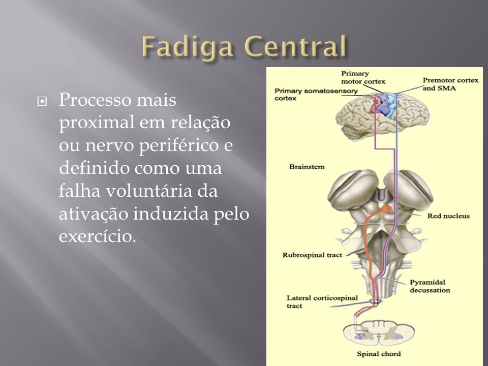 Fadiga Central Processo mais proximal em relação ou nervo periférico e definido como uma falha voluntária da ativação induzida pelo exercício.