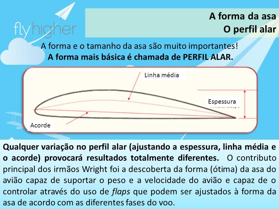 A forma da asa O perfil alar