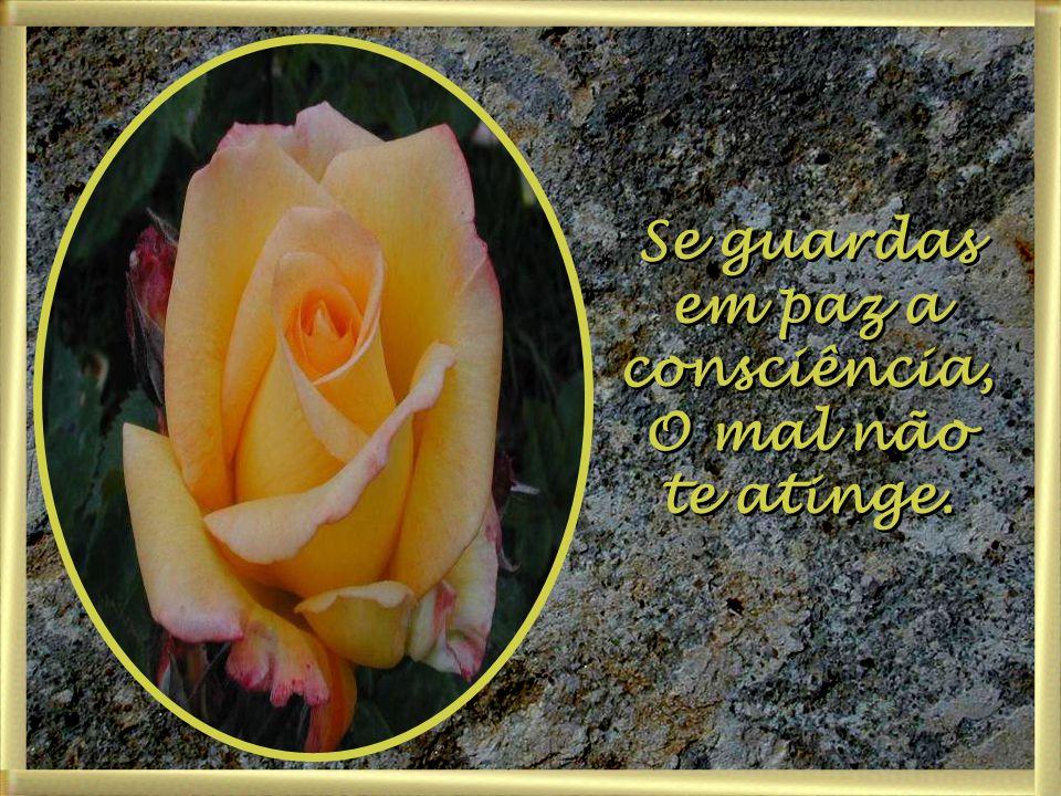 Se guardas em paz a consciência,