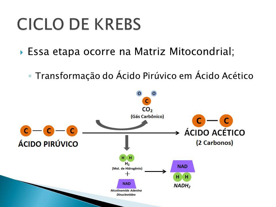 CICLO DE KREBS Essa etapa ocorre na Matriz Mitocondrial;