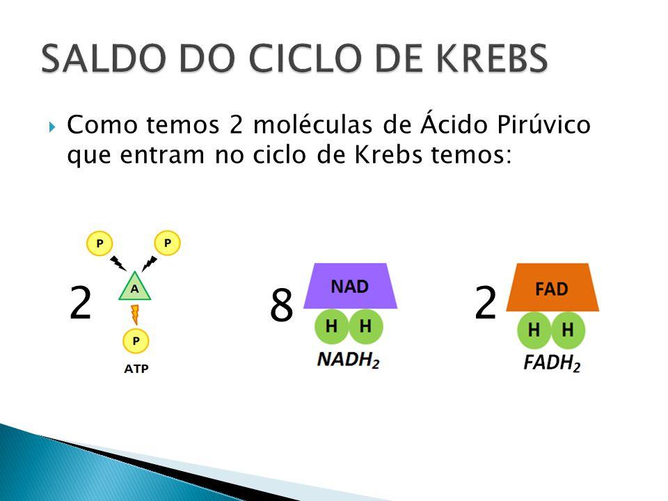 SALDO DO CICLO DE KREBS Como temos 2 moléculas de Ácido Pirúvico que entram no ciclo de Krebs temos: