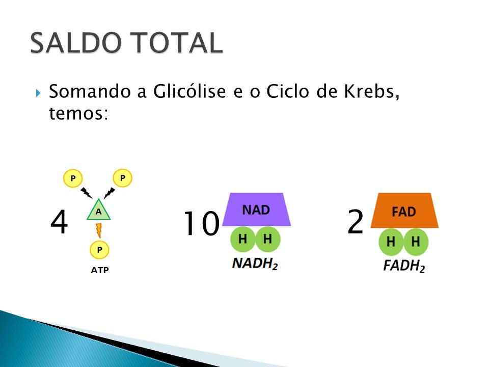 SALDO TOTAL Somando a Glicólise e o Ciclo de Krebs, temos: 4 10 2