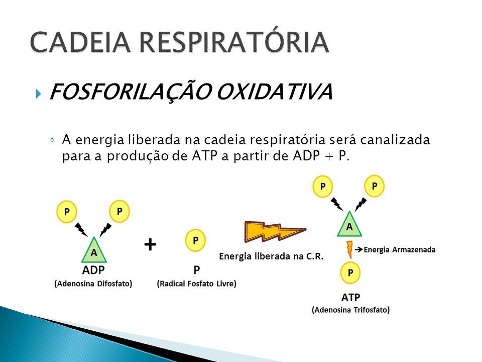 CADEIA RESPIRATÓRIA FOSFORILAÇÃO OXIDATIVA