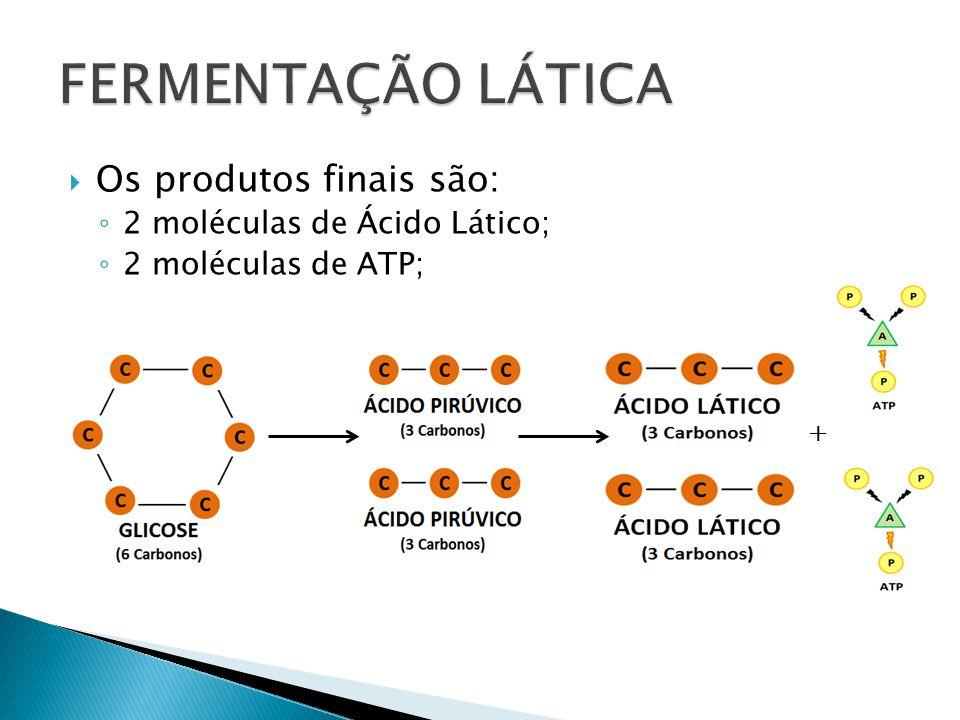 FERMENTAÇÃO LÁTICA Os produtos finais são: