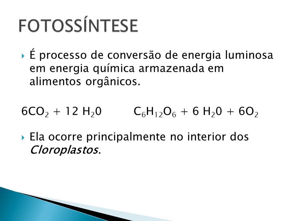 FOTOSSÍNTESE É processo de conversão de energia luminosa em energia química armazenada em alimentos orgânicos.