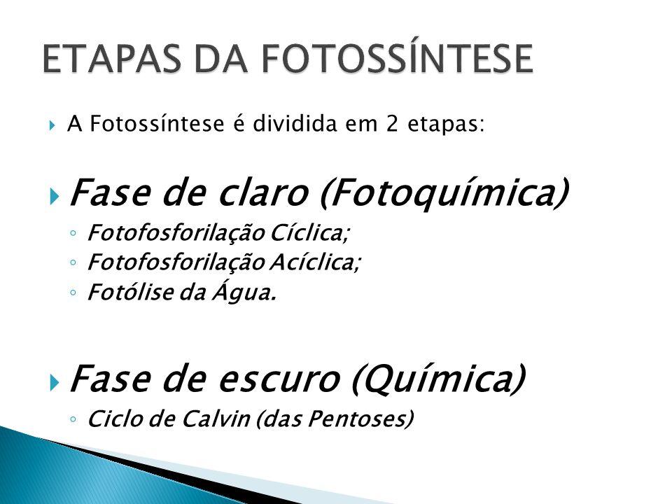 ETAPAS DA FOTOSSÍNTESE