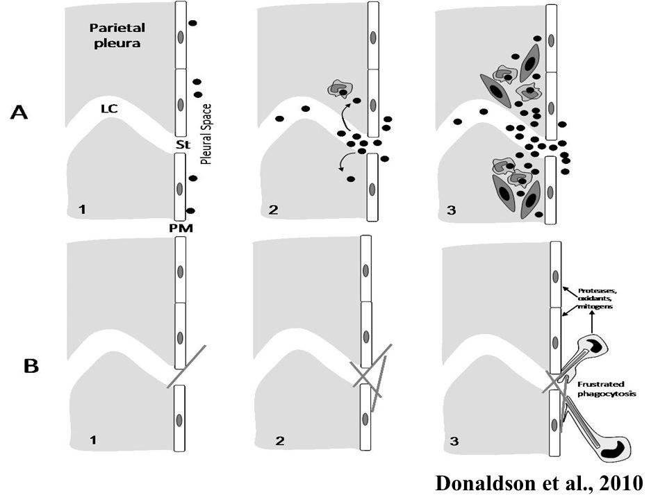 Donaldson et al., 2010