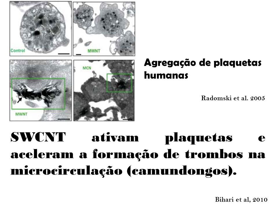 SWCNT ativam plaquetas e aceleram a formação de trombos na microcirculação (camundongos).