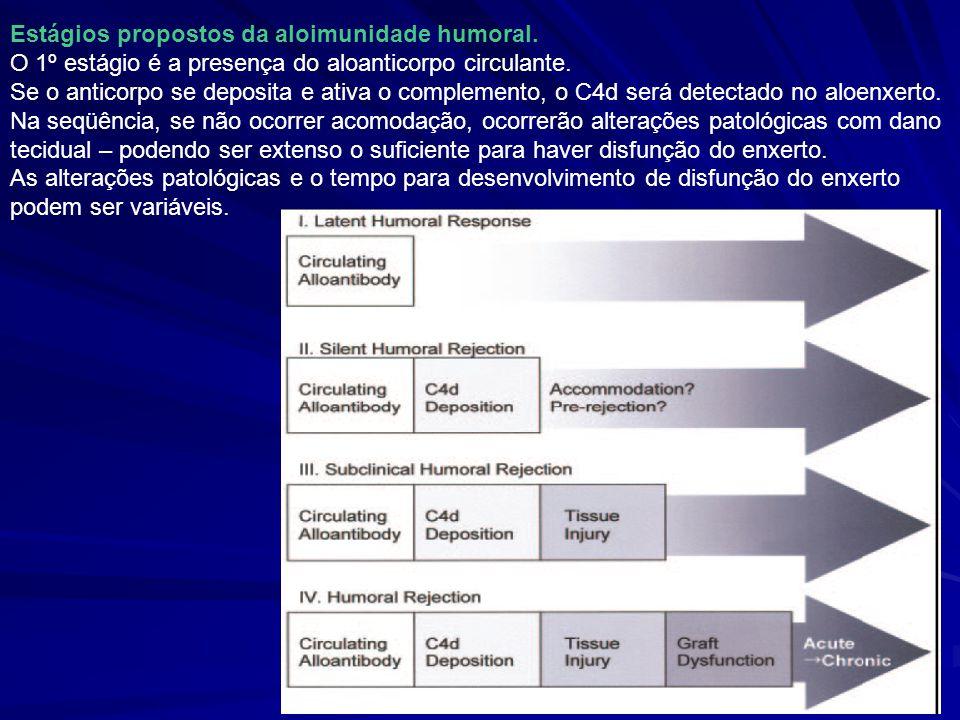 Estágios propostos da aloimunidade humoral.