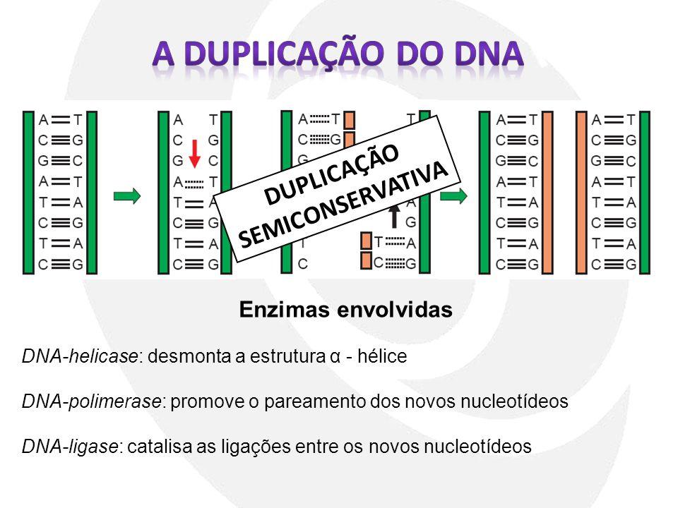 A DUPLICAÇÃO DO DNA DUPLICAÇÃO SEMICONSERVATIVA Enzimas envolvidas