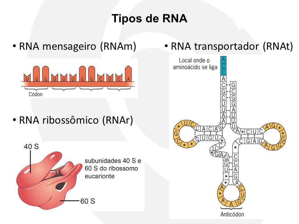 Tipos de RNA RNA mensageiro (RNAm) RNA transportador (RNAt) RNA ribossômico (RNAr)