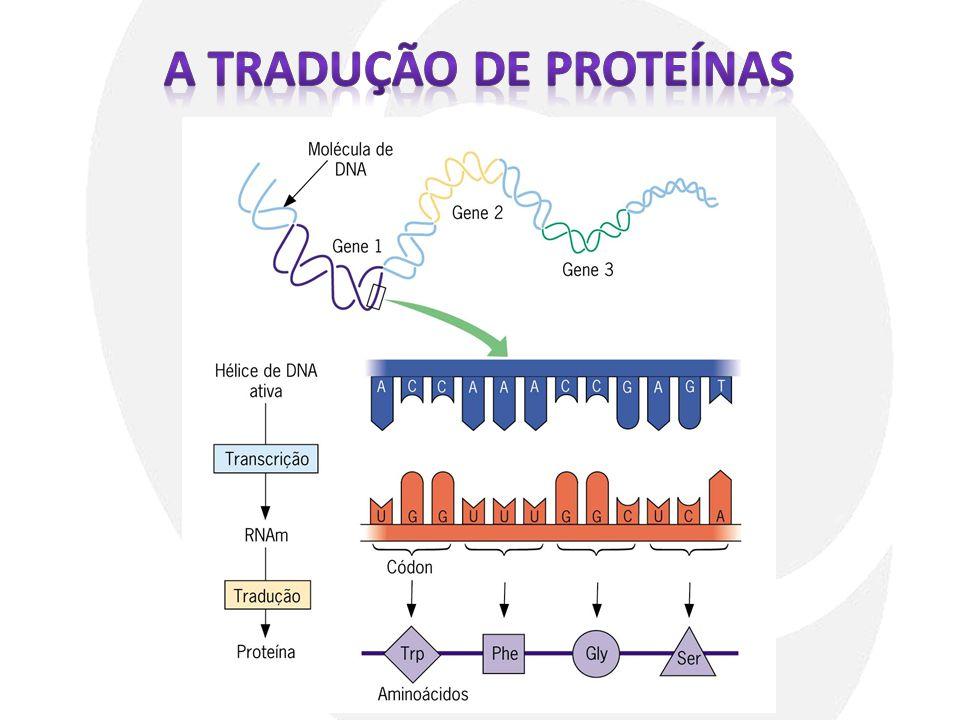 A Tradução de proteínas