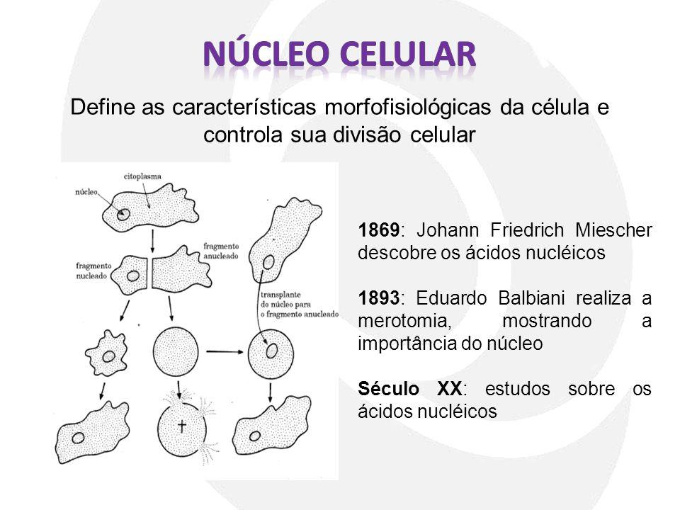Núcleo CELULar Define as características morfofisiológicas da célula e controla sua divisão celular.