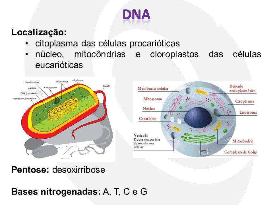 DNA Localização: citoplasma das células procarióticas