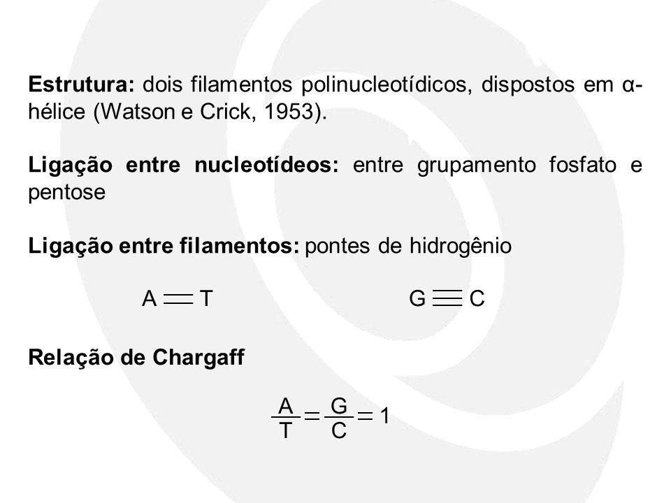 Estrutura: dois filamentos polinucleotídicos, dispostos em α-hélice (Watson e Crick, 1953).