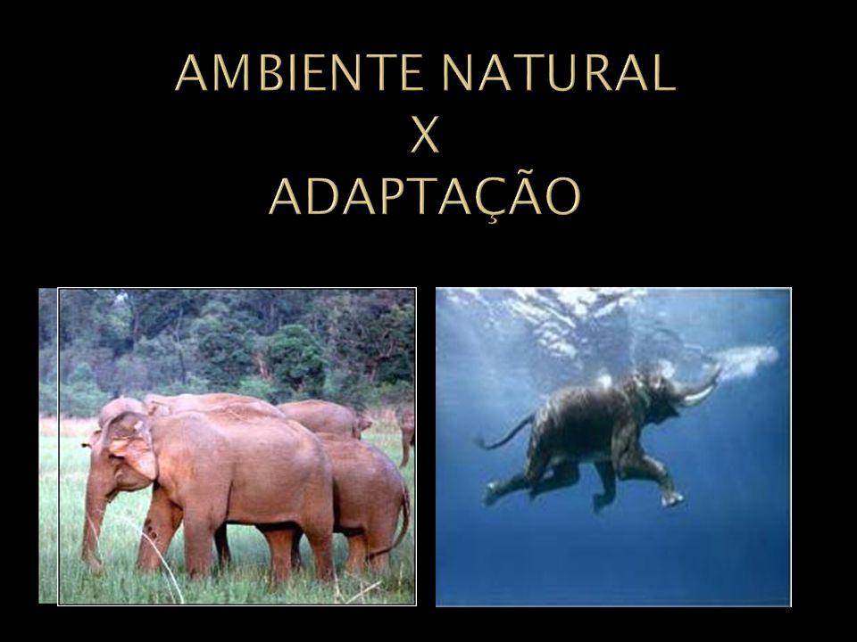 AMBIENTE NATURAL X ADAPTAÇÃO