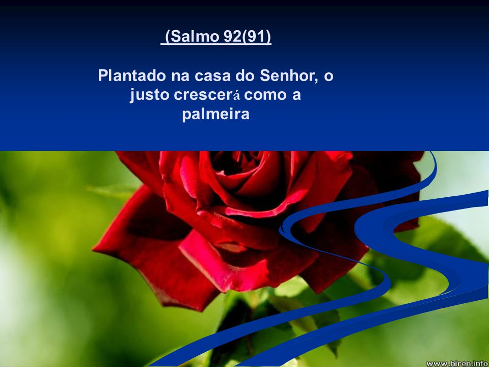 Plantado na casa do Senhor, o justo crescerá como a palmeira