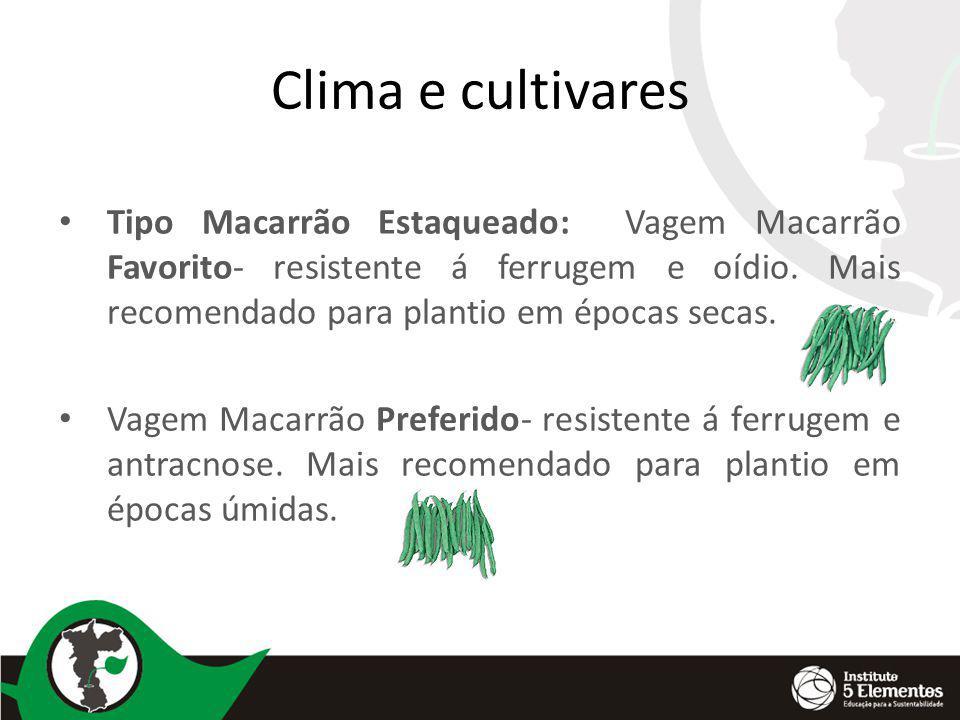 Clima e cultivares Tipo Macarrão Estaqueado: Vagem Macarrão Favorito- resistente á ferrugem e oídio. Mais recomendado para plantio em épocas secas.