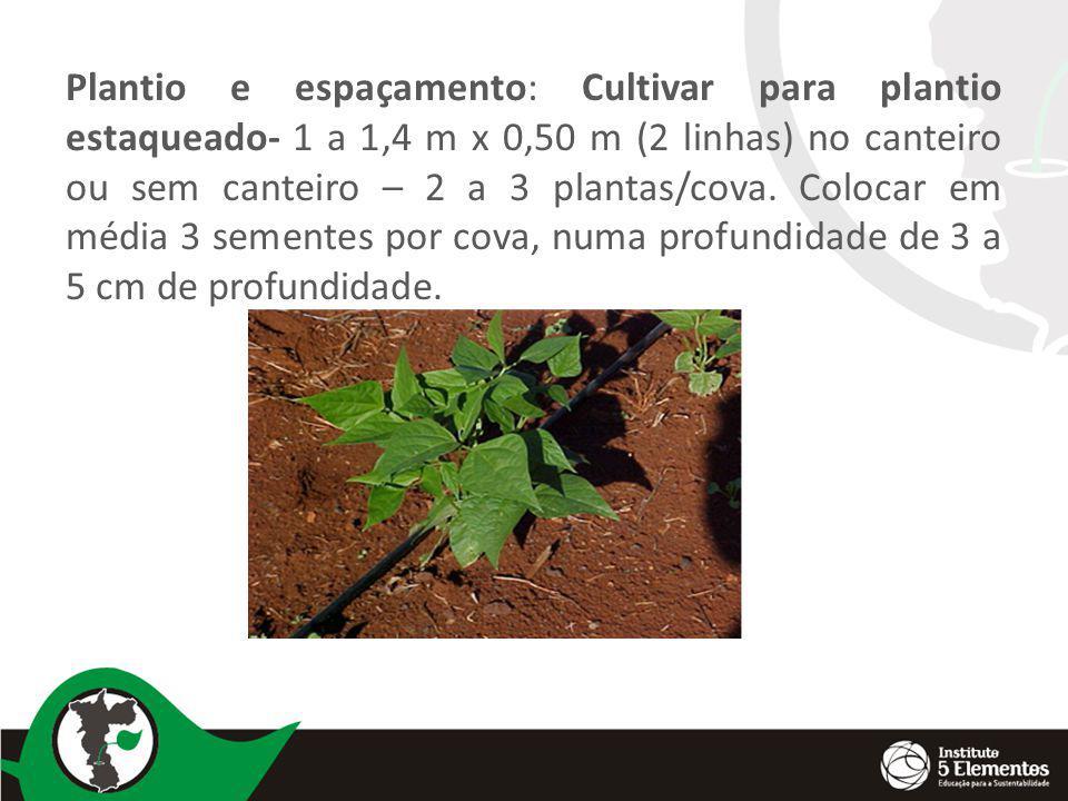 Plantio e espaçamento: Cultivar para plantio estaqueado- 1 a 1,4 m x 0,50 m (2 linhas) no canteiro ou sem canteiro – 2 a 3 plantas/cova. Colocar em média 3 sementes por cova, numa profundidade de 3 a 5 cm de profundidade.