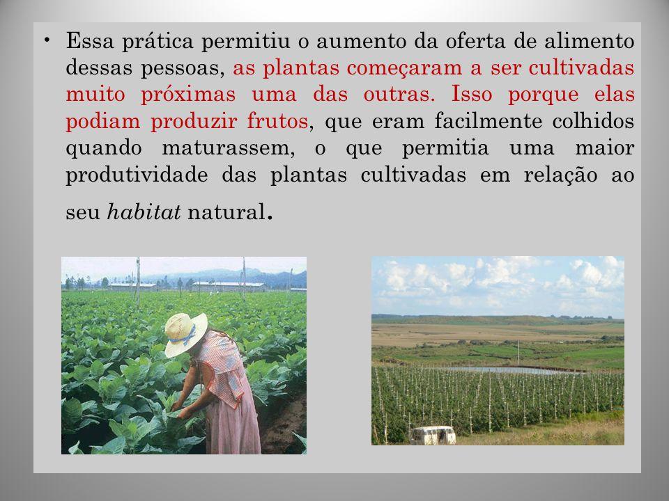 Essa prática permitiu o aumento da oferta de alimento dessas pessoas, as plantas começaram a ser cultivadas muito próximas uma das outras.