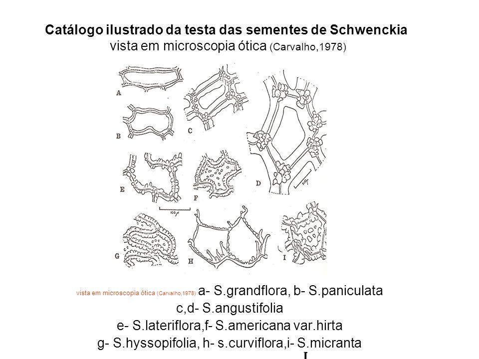 e- S.lateriflora,f- S.americana var.hirta