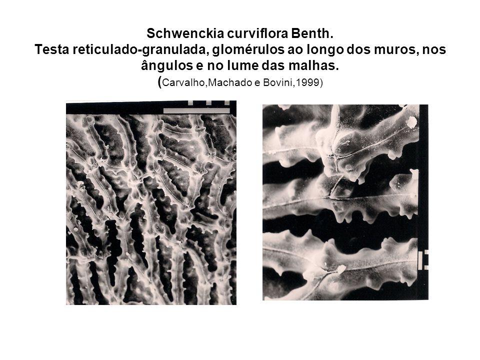 Schwenckia curviflora Benth