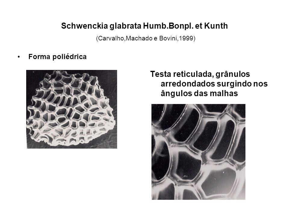 Schwenckia glabrata Humb. Bonpl