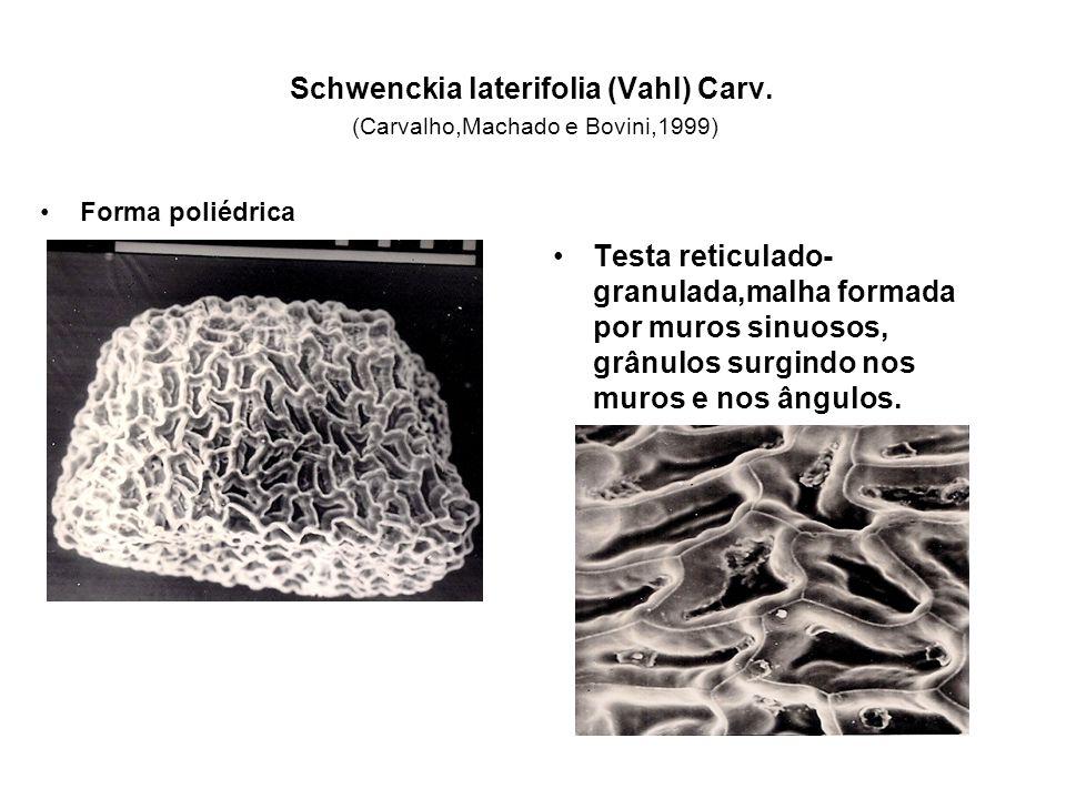 Schwenckia laterifolia (Vahl) Carv. (Carvalho,Machado e Bovini,1999)