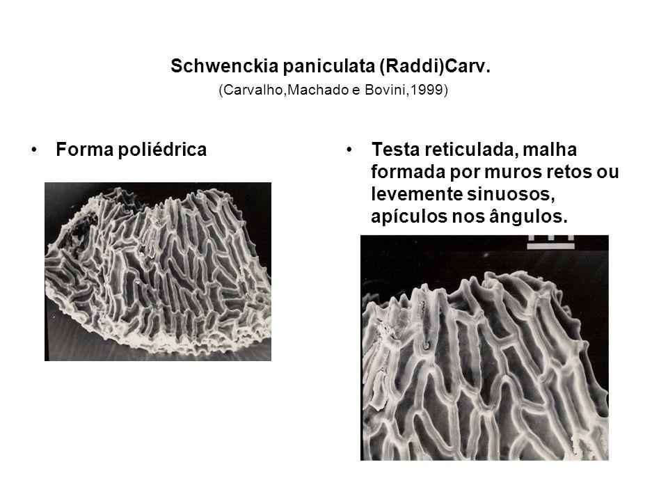 Schwenckia paniculata (Raddi)Carv. (Carvalho,Machado e Bovini,1999)