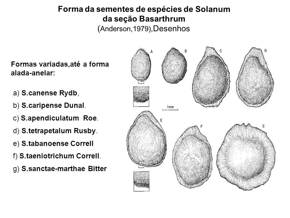 Forma da sementes de espécies de Solanum da seção Basarthrum (Anderson,1979),Desenhos