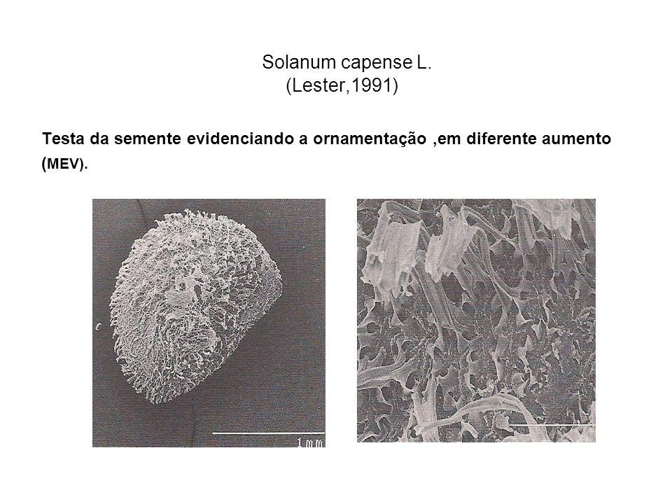 Solanum capense L. (Lester,1991)