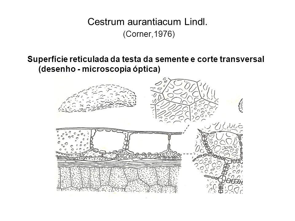 Cestrum aurantiacum Lindl. (Corner,1976)