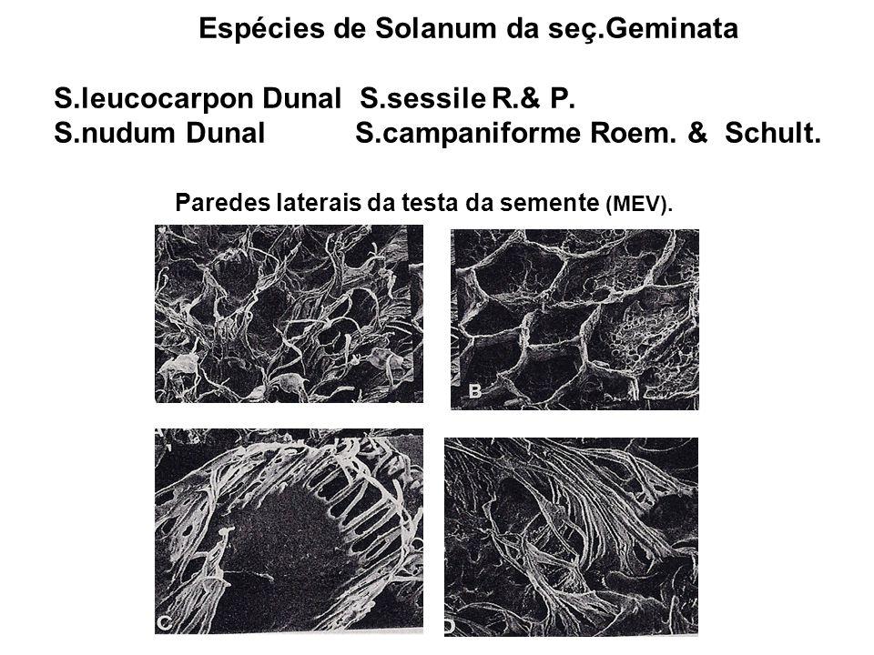 Espécies de Solanum da seç. Geminata S. leucocarpon Dunal S. sessile R