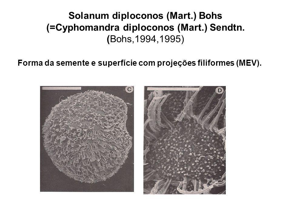Solanum diploconos (Mart. ) Bohs (=Cyphomandra diploconos (Mart