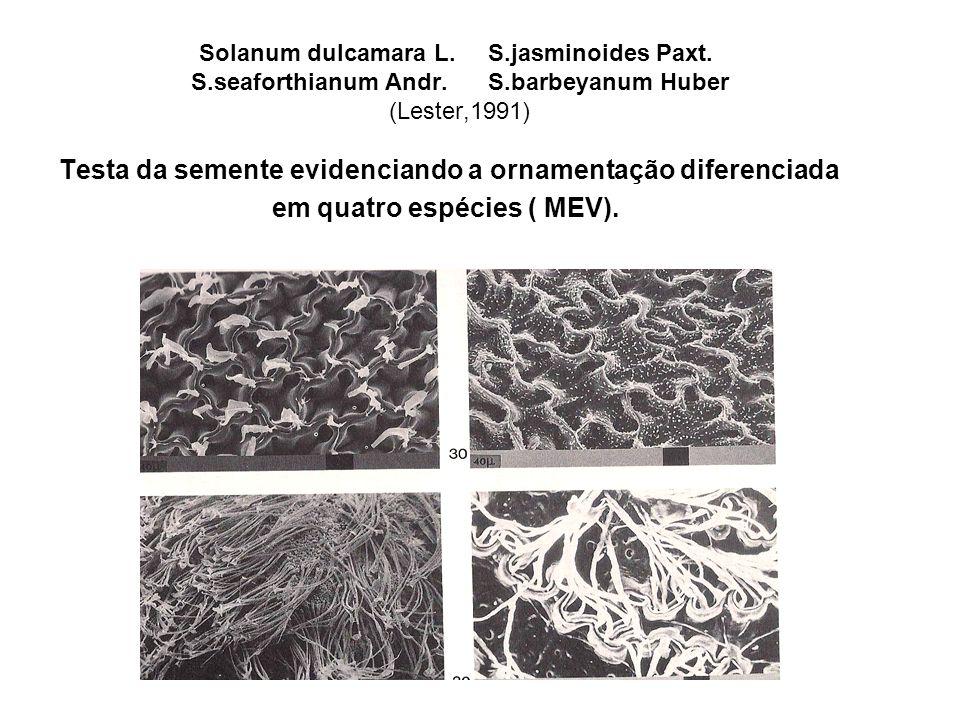 Testa da semente evidenciando a ornamentação diferenciada