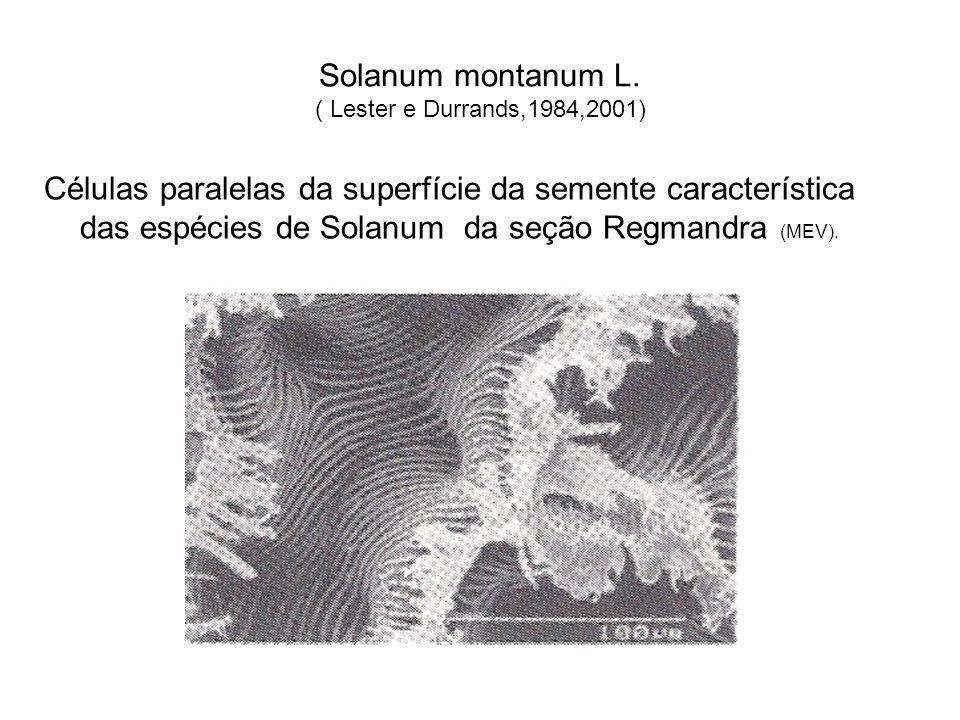 Solanum montanum L. ( Lester e Durrands,1984,2001)