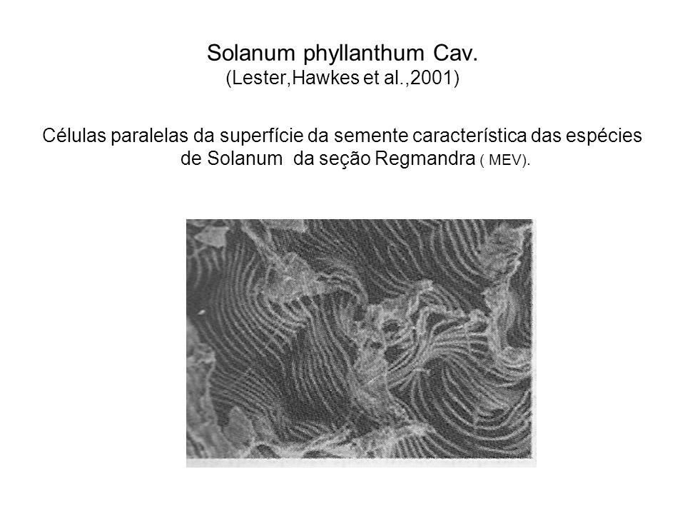 Solanum phyllanthum Cav. (Lester,Hawkes et al.,2001)