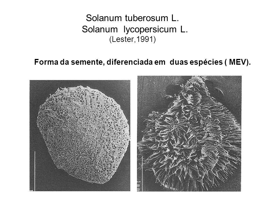 Solanum tuberosum L. Solanum lycopersicum L. (Lester,1991)