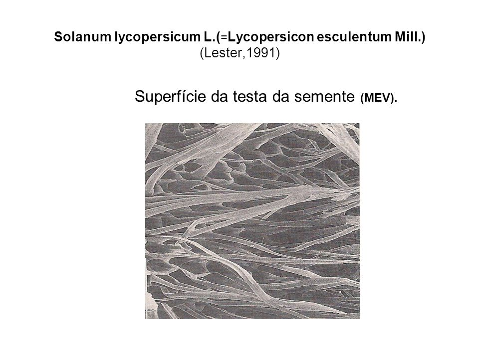 Solanum lycopersicum L.(=Lycopersicon esculentum Mill.) (Lester,1991)