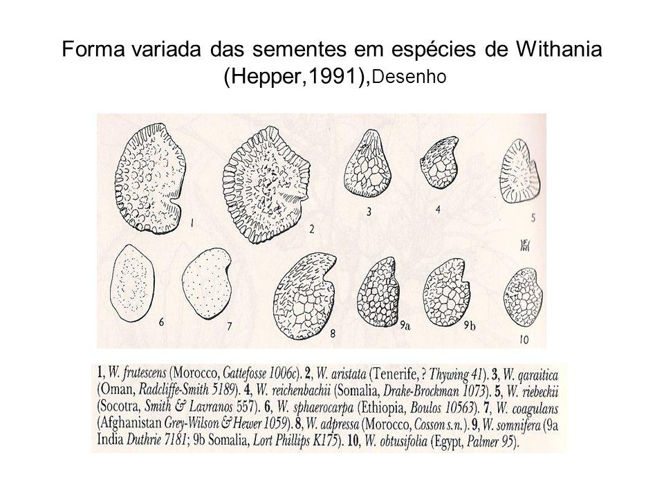Forma variada das sementes em espécies de Withania (Hepper,1991),Desenho