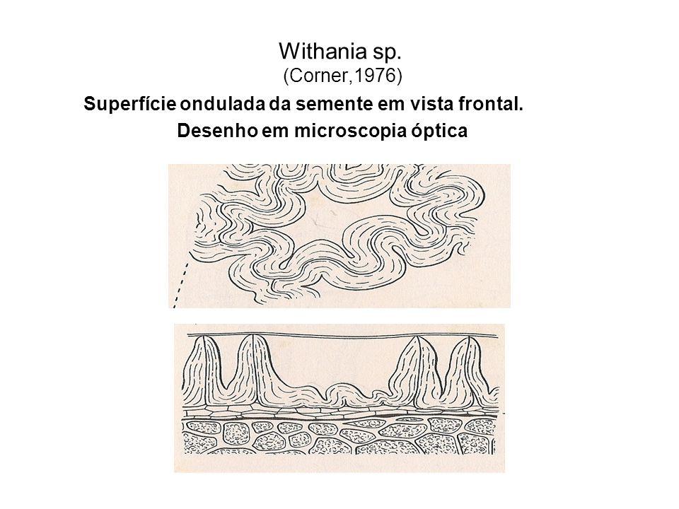Withania sp. (Corner,1976) Superfície ondulada da semente em vista frontal.