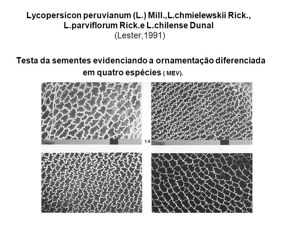 Lycopersicon peruvianum (L. ) Mill. ,L. chmielewskii Rick. , L