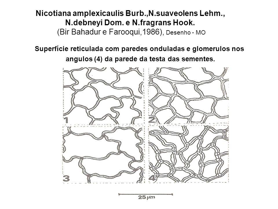 Nicotiana amplexicaulis Burb. ,N. suaveolens Lehm. , N. debneyi Dom