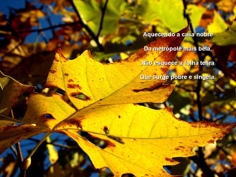 Não esquece a folha tenra Que surge pobre e singela.