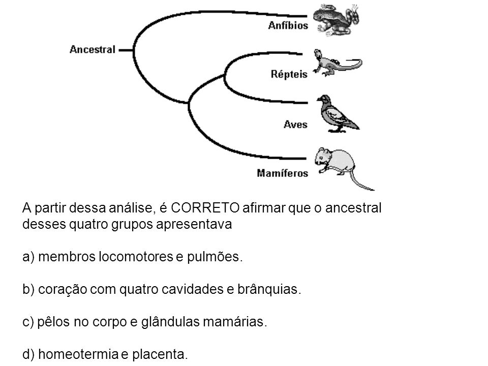 A partir dessa análise, é CORRETO afirmar que o ancestral desses quatro grupos apresentava