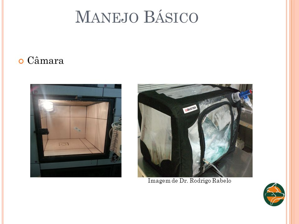 Manejo Básico Câmara Imagem de Dr. Rodrigo Rabelo