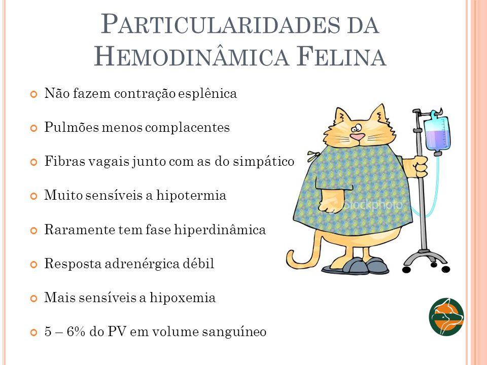 Particularidades da Hemodinâmica Felina