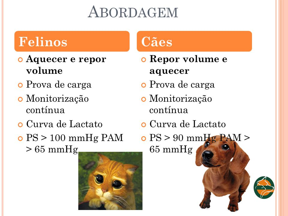 Abordagem Felinos Cães Aquecer e repor volume Prova de carga