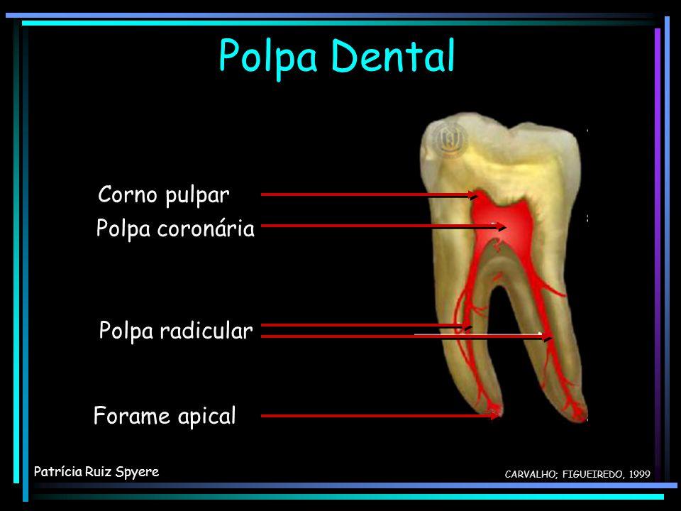 Polpa Dental Corno pulpar Polpa coronária Polpa radicular