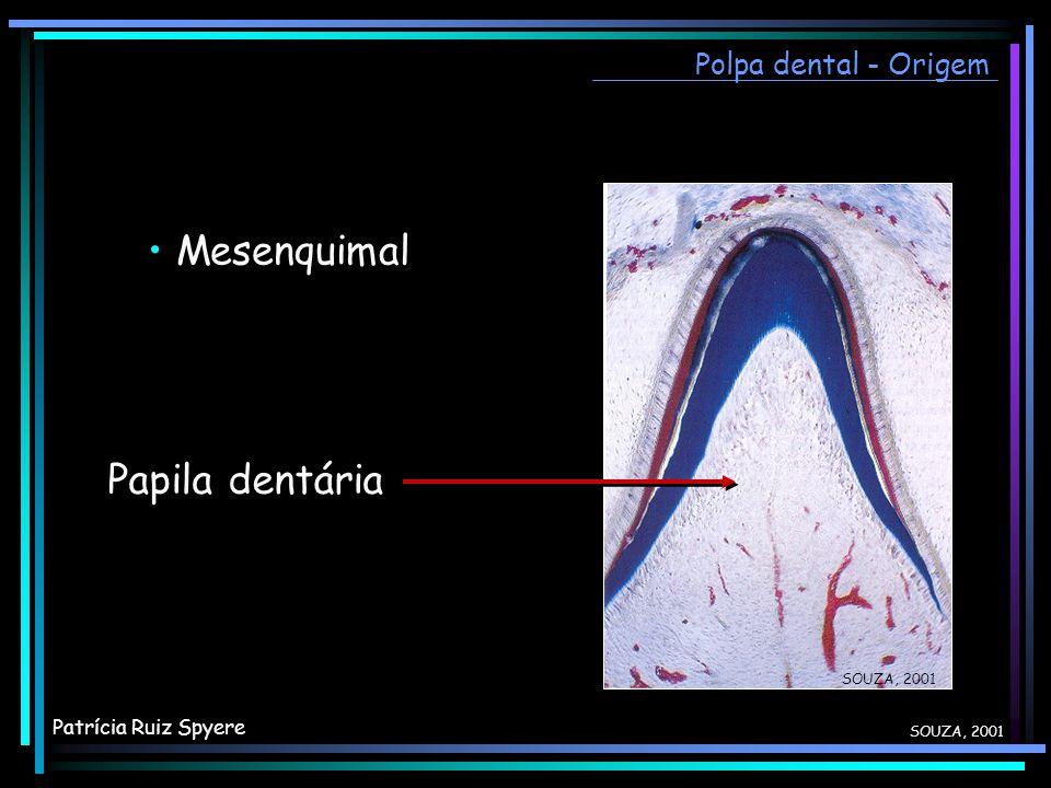 • Mesenquimal Papila dentária Polpa dental - Origem